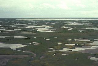 Beringia lowland tundra