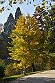 L'arbre aux feuilles dorées (22188068103).jpg