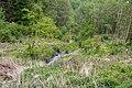 Lügde - 2015-05-24 - LIP-049 Ilsenbach (19).jpg