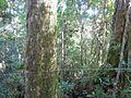 La Amistad Panama Biosphere Reserve - Parque Nacional Volcan Baru (a core zone) 37.JPG