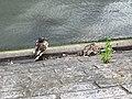La Seine - panoramio (4).jpg