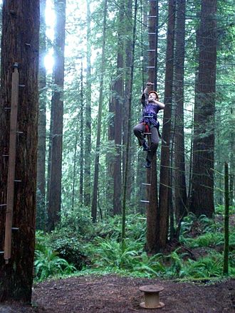 Arcata Community Forest - Climbing under the auspices of the City of Arcata's Recreation Division in the Arcata municipal forest.
