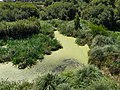 Lagoa da Apúlia 7.jpg