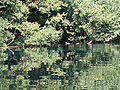 Lake Ohrid underground springs 3.JPG