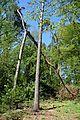 Landschaftsschutzgebiet Gütersloh - Isselhorst - Wäldchen am Krullsbach (1).jpg