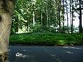 Landschaftsschutzgebiet Waldgebiet bei Neuenkirchen Melle, kurz vor Straßenende - Datei 2.jpg