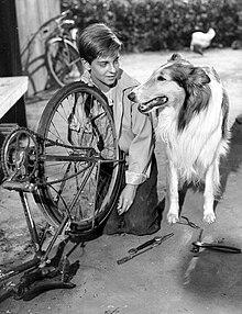 Lassie kaj Tommy Rettig 1956.JPG