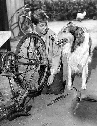 Lassie - Tommy Rettig with Lassie Junior, son of Pal, the first Lassie, in the Lassie television series