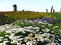 Last week of 2011 Spring in Tehran - panoramio (3).jpg
