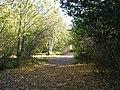 Late Autumn - Belhus Woods - geograph.org.uk - 607632.jpg