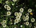 Laukaa - plants.jpg
