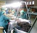 Lavorazione delle castagne a Roccadaspide.jpg