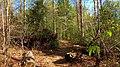 Lawrence County, AL, USA - panoramio (3).jpg