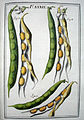 LeBerryais Haricots planche 39.jpg
