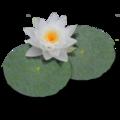 LilyPond-logo.png