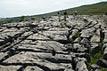 Limestone pavement above Malham Cove - geograph.org.uk - 632523.jpg