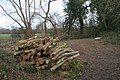 Log Pile - geograph.org.uk - 736474.jpg