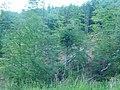 Logging at National park Kopaonik. Serbia.jpg