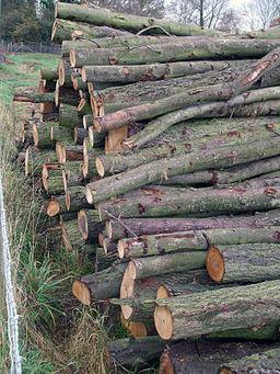 Logs (2071234107)