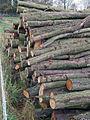 Logs (2071234107).jpg