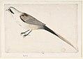Long-Tailed Bird Seen in Profile. MET DP809437.jpg