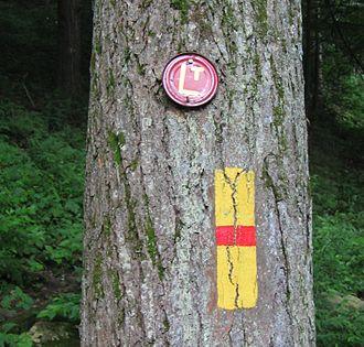 Loyalsock Trail - Loyalsock Trail blazes on a tree