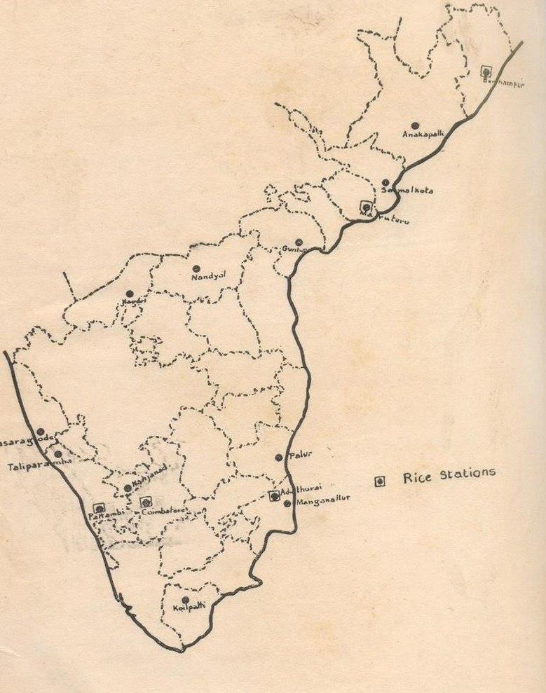 Madras Rice 1936