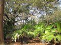Magnolia Lane Plantation House Across Plants.JPG