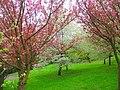 Mala Strana blossoms - panoramio.jpg