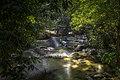 Malaysia Tropical Rainforest.jpg