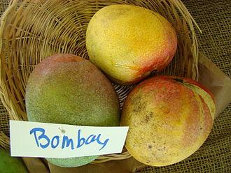 Bombay (mango) - Bombay mango at the Redland Summer Fruit Festival, Fruit and Spice Park, Homestead, Florida.