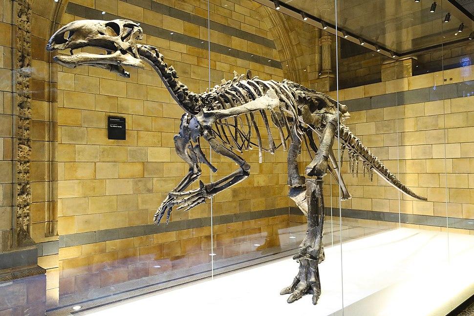 Mantellisaurus left side.jpeg