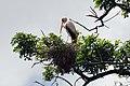 Manyara 2012 05 29 2179 (7482077800).jpg