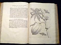 Maria Sibylla Merian - Insectenboek 001.JPG