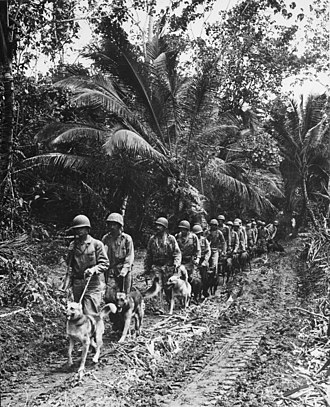 Marine Raiders - Raiders with their war dogs at Bougainville.