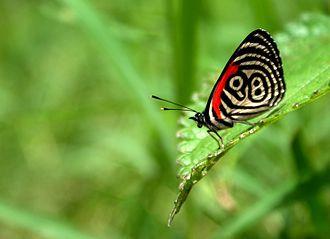 Yurubí National Park - Butterfly in the park