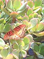 Mariposa en la fes aragon.jpg
