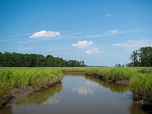 Jamestown, Virginia - Salt marshes along Jamestown Island. The ample wetlands on the island proved to be a breeding ground for mosquitoes.