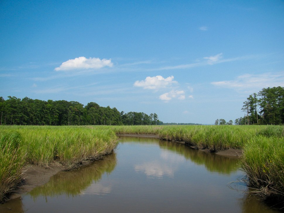 Marsh - Colonial National Historical Park (Robin Baranowski, NPS Photo) (8426448355)