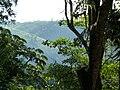 Mata virgem, Arujá, São Paulo. Virgin forest - panoramio.jpg