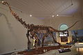 MaxakalisaurusTopai Rec.jpg