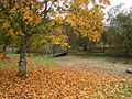 Maxwelton Chapel Grounds - geograph.org.uk - 679480.jpg