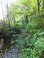 McSorley Creek - Saltwater State Park 3.jpg