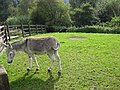 Meanwood donkey 2008.jpg