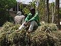 Men on Haycart - Bahir Dar - Ethiopia (8677105975) (2).jpg