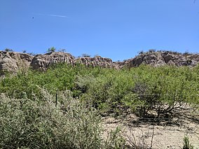 Mesilla Valley Bosque State Park on the trails.jpg