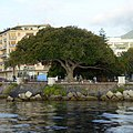 Messina - panoramio (2).jpg