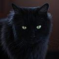 Micia nera su sfondo nero.jpg