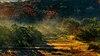 Mist lifting off cedars by DJ Schulte.jpg