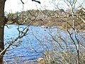 Mochrum Loch (north end) - geograph.org.uk - 166481.jpg